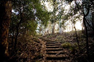 Visit-NARRABRI_day2_top_walking track at mt kaputar national park